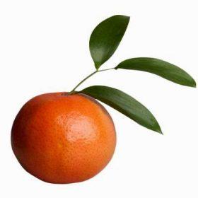 aroma-tangerina.jpg